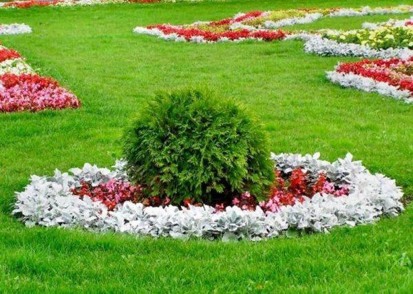 Растения на газоне